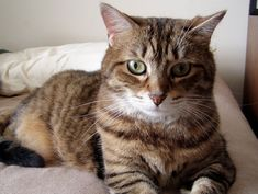Separation anxiety in cats is surprisingly common. Discover why it occurs, the signs of separation anxiety in cats and how to treat it.