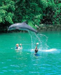 Swim with Dolphins.. Something I've been wanting to do for the longest..