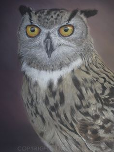 European Long-eared Owl, drawing using pastel pencil. For sale. If you are interested, please contact me.