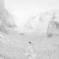 Crow and Valley View 2005  gelatin silver print  Jeffrey Conley   <3