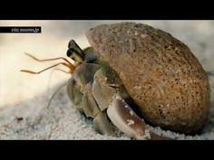 """Ação publicitária cria novas """"casas"""" para caranguejos-eremitas no Japão - YouTube"""