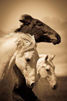 Cavalos bonitos