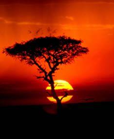 Kenya, Africa:  Safari Adventure!