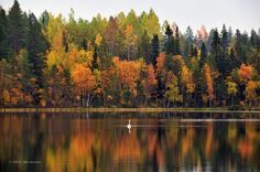 Autumn in Suomussalmi, Finland