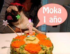 Cómo hacer torta de cumpleaños para perros ♥ Pastel para perros. Festejamos con Moka #pastelparaperros #comidacaseraparaperros  #comidaparaperros #mascotas #cakedog #comidasnaturalesparaperros #comidaparaperrossaludable #alimentosparaperros #tortacumpleañosparaperros #healthy #doceparacães #cães #cani #cakebrithdaydog