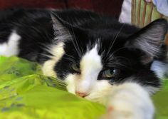"""Shadow Cats Rescue Provides Sanctuary for """"Unadoptable"""" Kitties 