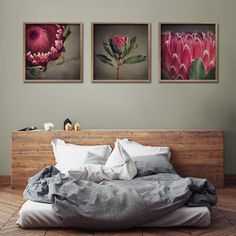 Red Protea - 3x 60x60cm prints