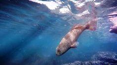 MorningTide Fishing - YouTube