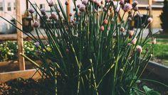 Egal ob Garten oder Balkon, Hauptsache ohne Schadstoffe flowers-garden-herbs-flowerbed