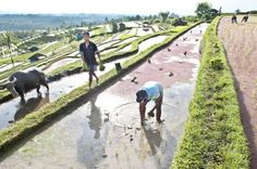 GLOBE NEWS : INDONESIA NEWS-JAKARTA POST-Development 'should ta...
