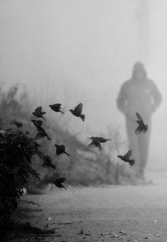 inflight   flutter   birds   mist   walk   wander   nature   black & white  