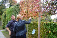 Plant je haag, bomen, fruitbomen en leibomen tussen november tot maart.