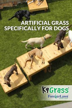 If you're thinking of installing artificial grass at your dog park, we can help. the artificial grass designed specifically for dogs, is a cleaner, safer and better smelling environment for pets. K9 Grass, Indoor Dog Park, Indoor Dog Potty, Dog Boarding Kennels, Dog Kennels, Pet Boarding, Dog Playground, Dog Spaces, Dog Yard