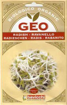 Germogli di Ravanello Daikon Bio - Semi - Semilandia