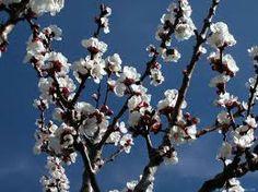 flores blancas tipicas de la tundra