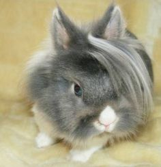I think the kids would love a bunny that is sporting the Flock of Seagulls look!