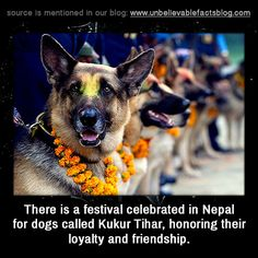 There is a festival celebrated in Nepal for dogs called Kukur Tihar, honoring their loyalty and friendship.