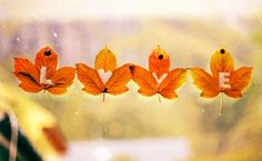 Shared by Bianca Vime. Find images and videos about love, autumn and fall on We Heart It - the app to get lost in what you love. Fall Cover Photos, Fall Facebook Cover Photos, Facebook Timeline Covers, Cover Pics, Timeline Photos, Fb Banner, October Country, Cover Photo Quotes, Love Is In The Air
