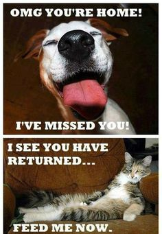 Difference Between Dogs And Cats
