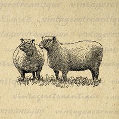 Digital Printable Two Southdown Sheep Graphic Illustration Image Download Vintage Clip Art. Digital graphic from vintage artwork. This high quality printable digital illustration can be used for printing, fabric transfers, tote bags, t-shirts, papercrafts, tea towels, and many other uses. This digital image is large and high quality, size 8½ x 11 inches. Transparent background version included with every digital image.