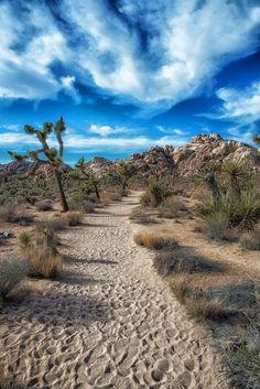 Joshua Tree National Park is a beautiful desert landscape in California.