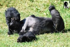 We hear it's #NationalLazyDay today. Sabyinyo group's Gihishamwotsi says he's 100% on board. Let's bask in the sun a while, shall we?