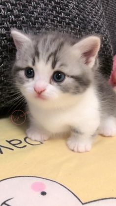 Baby Animals Super Cute, Cute Baby Cats, Cute Little Kittens, Cute Little Animals, Cute Cats And Kittens, Cute Funny Animals, Kittens Cutest, Cute Kitty, Happy Kitty