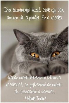 Russian Blue Cats Kittens Flat Faced Cat Breeds - In this article you will find some flat faced cat breeds that you can take care, keep, and affection. You need to remember, do not forget to give meal. Blue Cats, Grey Cats, Funny Cats, Funny Animals, Cute Animals, Beautiful Cats, Animals Beautiful, Cat Breeds List, Flat Faced Cat