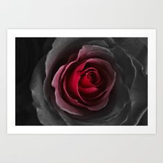 Black and Red Rose Art Print by DyanaJo - $15.00