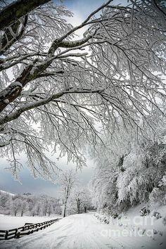 ***After the snow storm (Asheville, North Carolina) by John Haldane