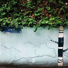 یه روز یه دیوار بود که خواب جنگل میدید #Tehran #wall #tree  #تهران #قبا #درخت