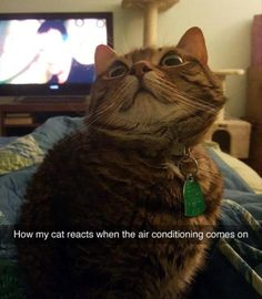 Funny Animal Pictures Of The Day - 24 Pics