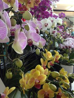 Specialty orchids at the Spring Garden Show in Costa Mesa.