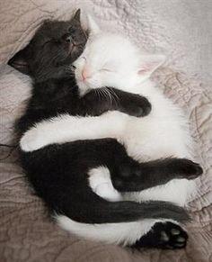 ... baby love ...