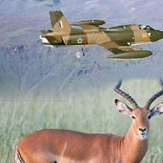 South African Air Force, Defence Force, Impala, Fighter Jets, The Past, Aircraft, Military, War, Vehicles