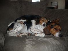 Dog pile... I forget where the original image came from. I love beagles.