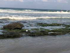 Tel Aviv Beach, Water, Outdoor, Gripe Water, Outdoors, Outdoor Games, The Great Outdoors
