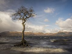 The Tree in the Loch Lomond · Milarrochy Bay · Scotland, how odd I painted a tree very similar to this for your brother @Noreen Mudge when his wife passed.