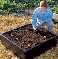 potato bed - you can plant A LOT of potatoes in a small space.