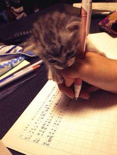 猫が宿題を手伝ってくれるにゃああああああああああああああああん : ハムスター速報
