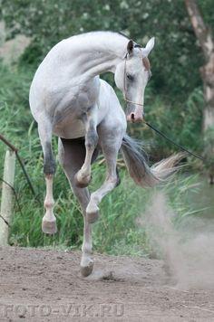 Съемка лошадей в Ставропольском конном заводе, июль 2010 / Horses from Stavropol…