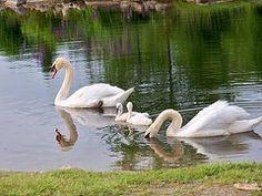 Lisa Young - Family Swim