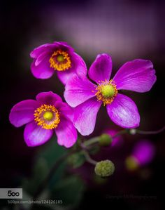 flower trio by edithnero. Please Like http://fb.me/go4photos and Follow @go4fotos Thank You. :-)