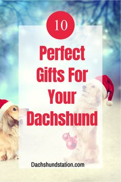 Perfect Gifts for Your Dachshund. Finding the Perfect Holiday Gift for your Dachshund is going to be super fun and easy this year!  As Dachshund Lovers and Owners, we know that our doxies deserve the best practical dog gifts that will keep them happy and busy. Best Christmas Gifts For Dachshunds.   dachshunds     #dachshund  #doxie