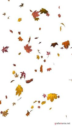 Autumn - leaves | Осень, желтые и красные листья - Набор элементов для коллажей