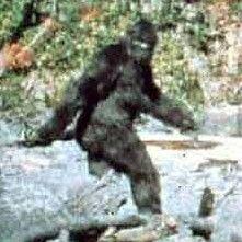 Scientist Confirms Bigfoot DNA in East Texas