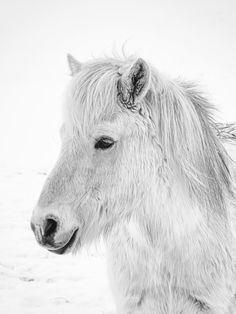 Child of Nature Photo in Album Animals - Photographer: DanielHerr Wildlife Photography Tips, Photography Tips For Beginners, Photography Tutorials, Animal Photography, Icelandic Horse, Shutter Speed, Nature Photos, Cute Animals, Photoshoot