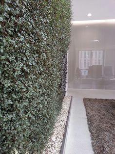 Home - Florawall Flora, Vertical Gardens, Green Walls, Shag Rug, Plants, Home Decor, Shaggy Rug, Decoration Home, Room Decor