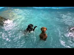 Non swimming dog giving lessons!