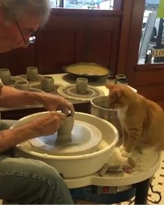 😊💖 Source by adeys videos wallpaper cat cat memes cat videos cat memes cat quotes cats cats pictures cats videos Cute Little Animals, Cute Funny Animals, Funny Cats, Cute Animal Videos, Funny Animal Pictures, Animals Crossing, Gato Gif, Funny Cat Videos, Cute Cats And Kittens